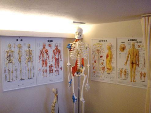 背中の急な痛みから、症状の変化